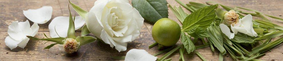 ESSENCE: GREEN ROSE